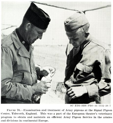 Army Pigeon Service